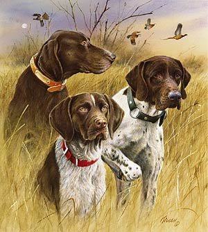the dog that wouldnu002639t hunt talent 911 hunting dogs 300x334